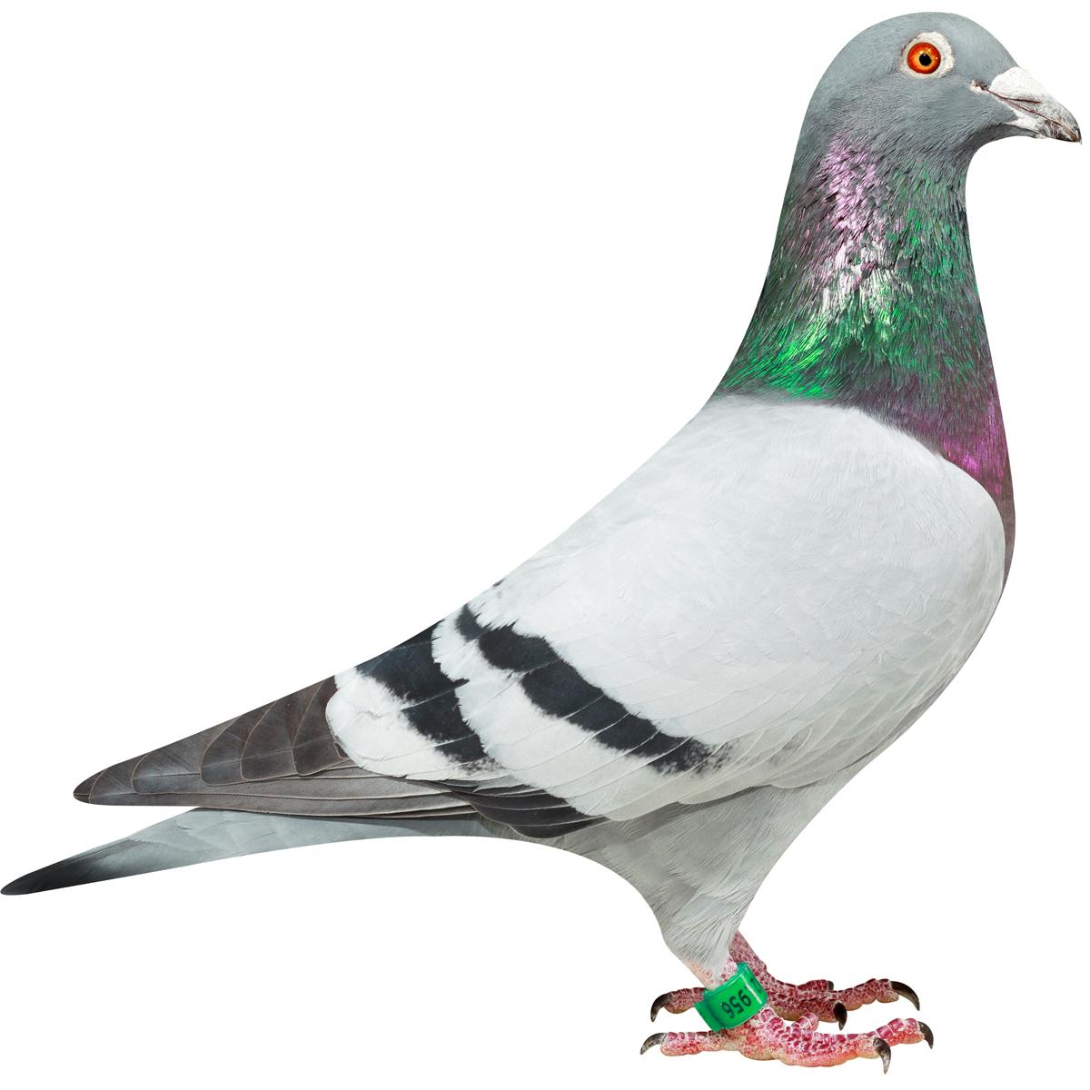 NL13-1921956