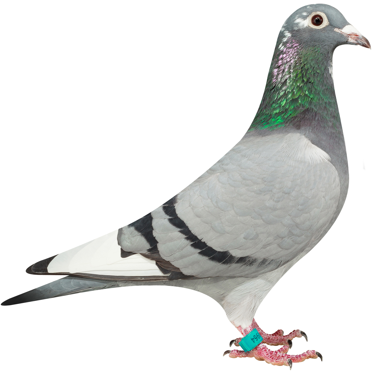 NL16-1310964