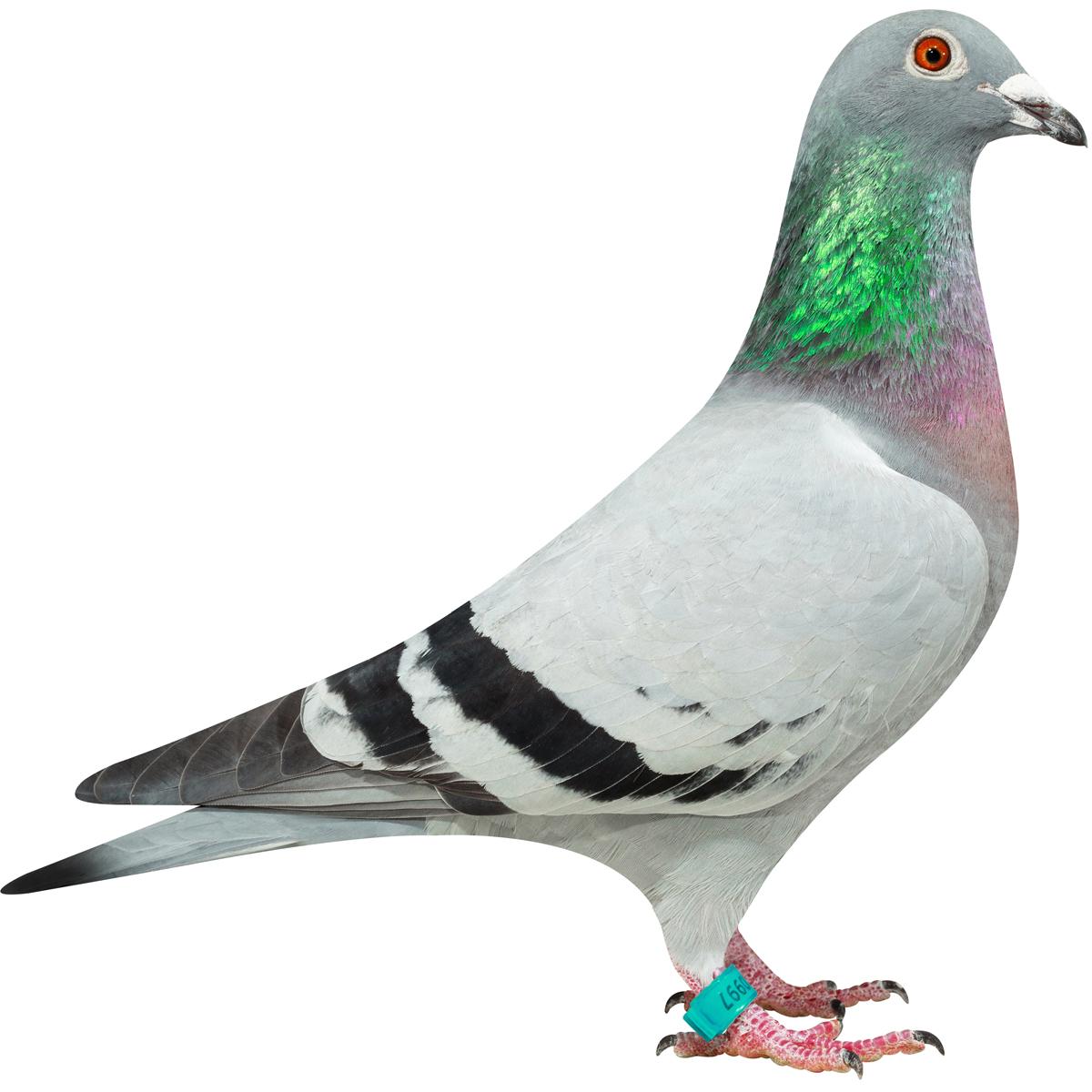 NL16-1310997