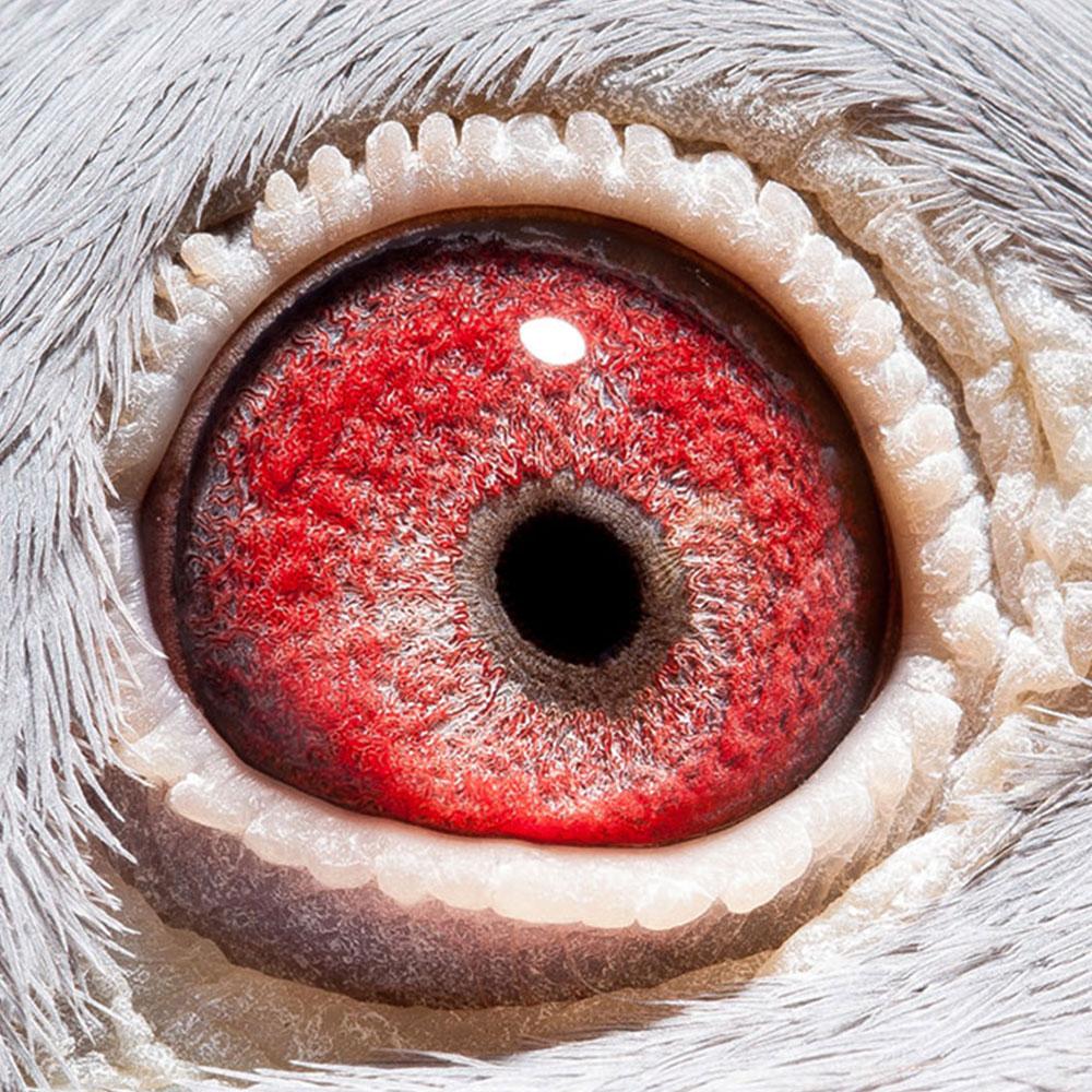 NL16-1310999_oog