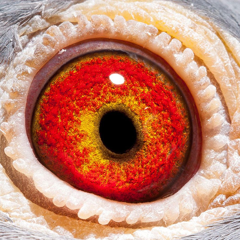 NL16-1311023_oog