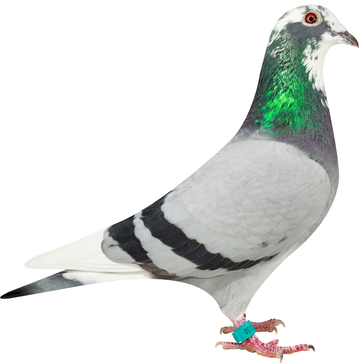 NL16-1311030